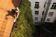 Entfernung von Grünbewuchs um Beschädigungen der Dachfläche und -rinne sowie Fallrohr vorzubeugen